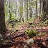 Pettinengo: Balcone del Biellese Trail