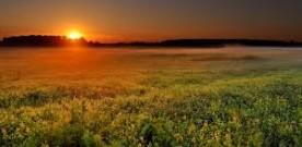 sole alba