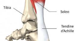 tendine d'achille (2)