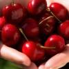 I benefici delle ciliegie negli sportivi